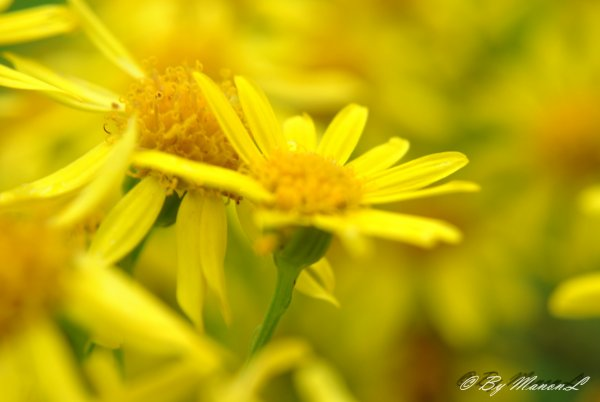 Xxman-photxX © NIKON D3000 ARTICLE: 66 Macro