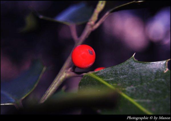 Manon laurent photographie © NIKON D3000 ARTICLE: 88