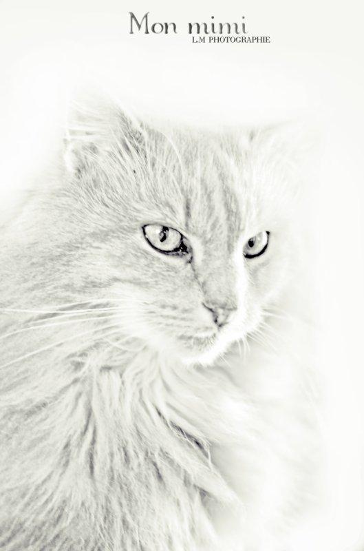 Manon laurent photographie © NIKON D7000 ARTICLE: 129