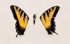x-Paramore-Officiel-x