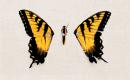 Photo de x-Paramore-Officiel-x