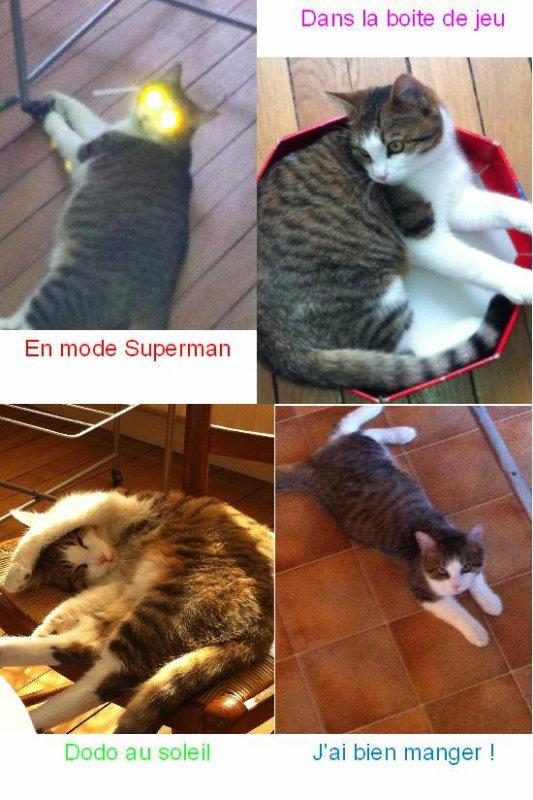 Mon chat ... Grisouille ;)
