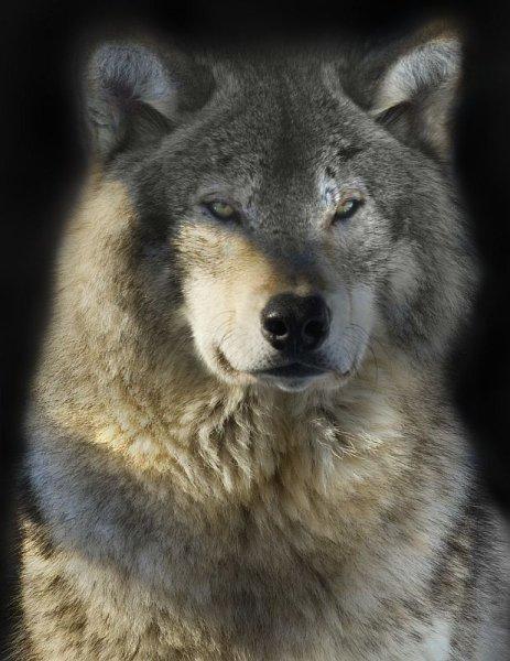 agréable journée mes tits loups bisous doux
