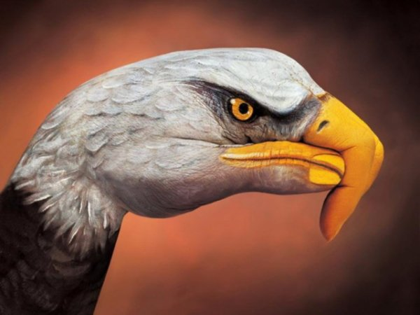 Body art - bald eagle