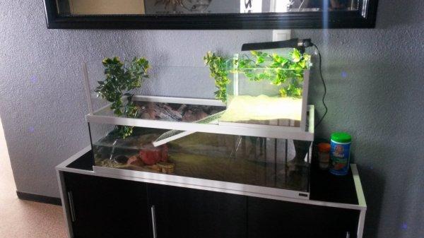Aquarium/terrarium des tortues