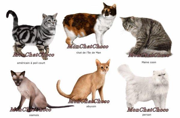 CHOISIR UN CHATON. Ta famille est enfin d'accord pour que tu aies un chaton. De race ou gouttière ? A toi de choisir. Les candidats ne manquent pas... Mais l'heureux élu de toute façon le plus mignon des minous.