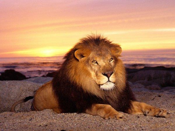 -liOn Of judah !-
