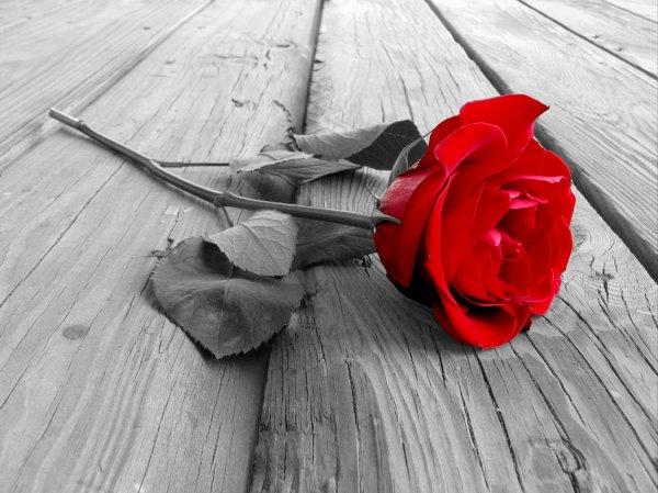 La fille ---> La rose