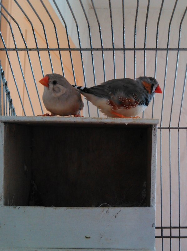 3 eme couple