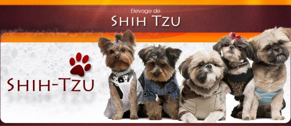 Site les Shih-tzu