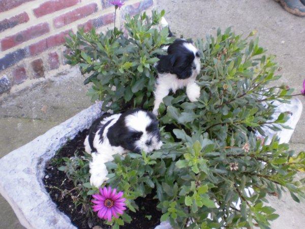 Un petit tour dans le bac a fleurs! ils sont trop beau les noir blanc!!