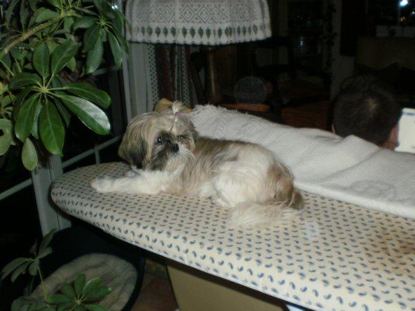 Yoshi s'instale comme un chat! ses bébés sont prévus fin avril.