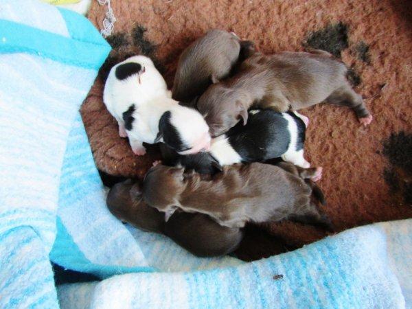 Mes premiers bébés chocolat