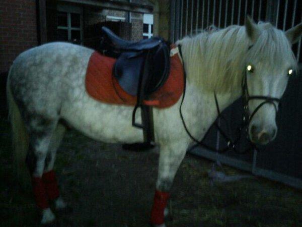 :susu: Ce cheval c'est un boss en saut ! Il se cabre trop bien sous la selle ^.^'