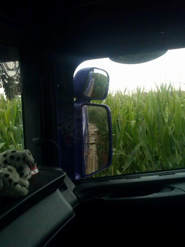 Petite promenade dans les champ de maïs pour recuperé de semi remorque sur un chantier