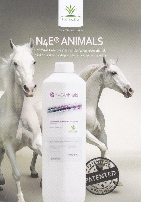 N4E Animals
