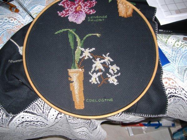 sal orchidée objectif 6
