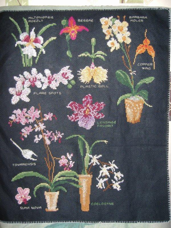sal orchidée objectif 7