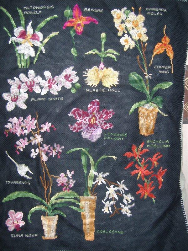 sal orchidée objectif 8