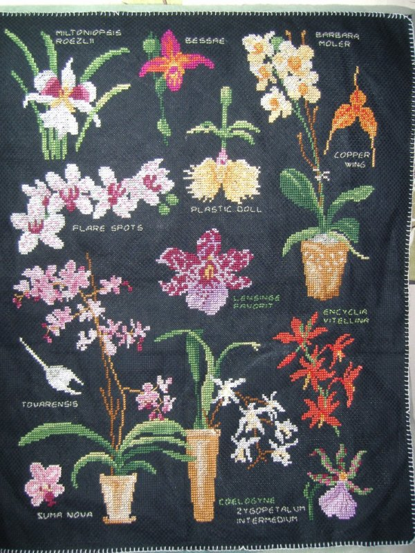 suite et fin sal orchidée