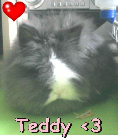 Teddy ♥