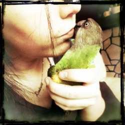 Notre Calopsitte : Pumky ,  Notre perroquet Maya & Notre Calopsitte Lilo