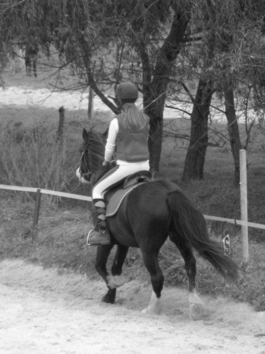 Un Ange est Tombé du Ciel Et m'a enmener aux 7ème Ciel. Ce fut un réel coup de foudre entre lui et moi !.. Tebeau c'est comme cela qu'il s'appelle et il y est ;) Et bien d'autres Poneys/chevaux ont changé ma vie une fois monté sur leurs dos.
