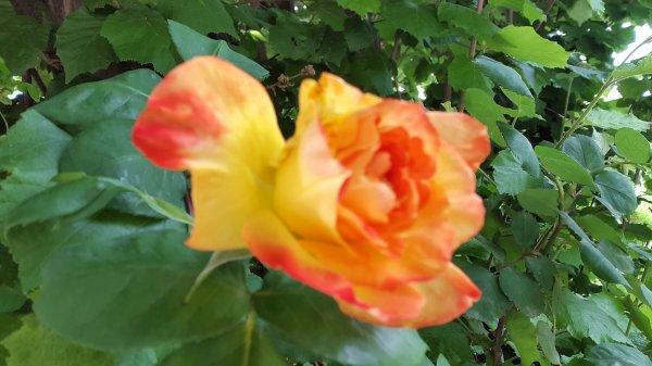 Quelques fleurs, rose et fushia