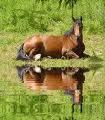 Sérieux, le cheval est mieux comme ça...
