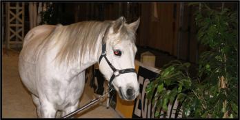 Salon du cheval de Paris - 4 et 5 décembre 2010