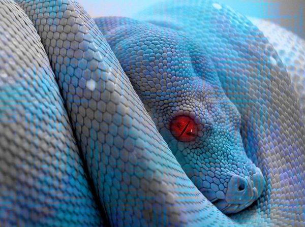 ₪ Les reptiles  ₪