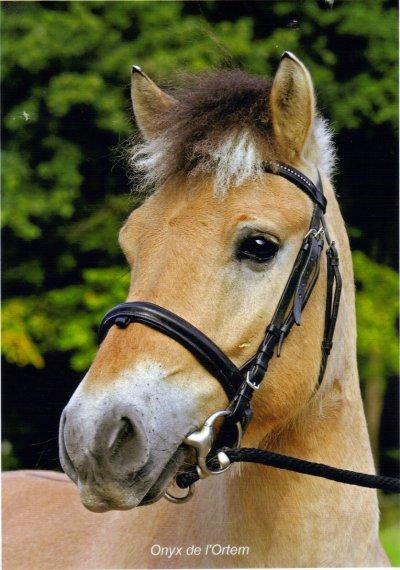 Poney de mon c0eur ♥