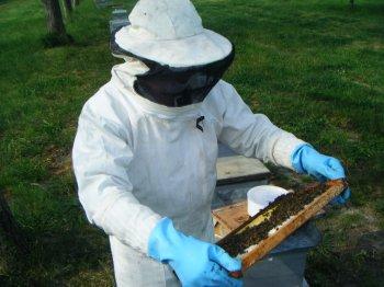 roland mon voisin au ruchers