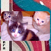 Photo de mes-fotos-animaux