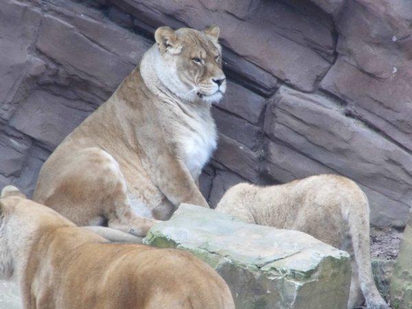 zoo d anvers