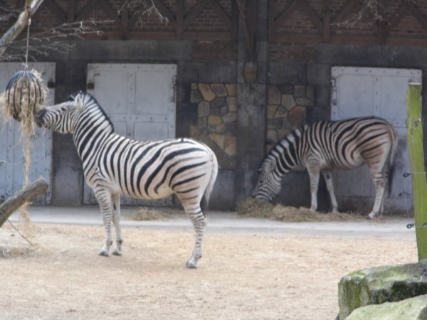 zoo d anvers