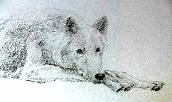 """""""On a beau donner à manger au loup, toujours il regarde du côté de la forêt."""""""