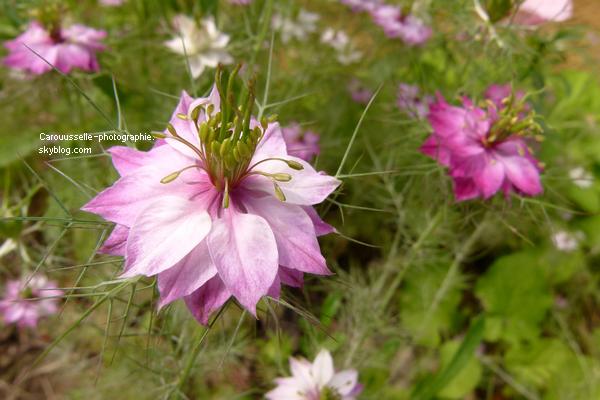Fleur très jolie dont je ne connais absolument pas le nom. Si vous connaissez merci de me donner le nom :)