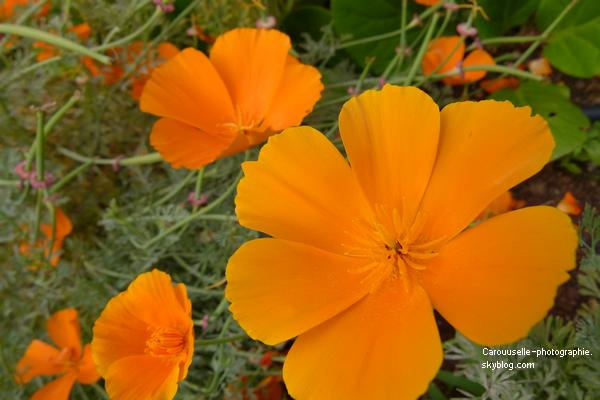 Fleur dont je ne connais pas le nom