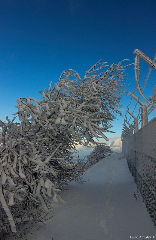 Neige 17 janvier 2015