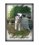 Photo de Loupio-Jumpeur