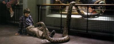 """Résultat de recherche d'images pour """"harry potter à l'école des sorciers zoo"""""""