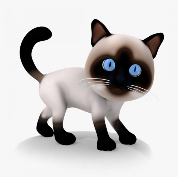 Cat 3d