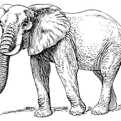 c'est l'elephant d'afrique