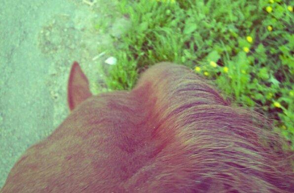 On choisit ce sport parce qu'on l'aime, mais on le choisit aussi parce qu'on aime les animaux.Quand ils meurent ce n'est pas comme briser un bâton de hockey ou une raquette de tennis. Il a changé ma carrière et il représentait tout pour moi. Beaucoup de gens disent que quand tu as un rapport très fort avec un cheval, tu deviens un peu comme lui ou que le cheval devient un peu comme toi. On avait un peu la même personnalité. On était deux gagnants, on avait la même énergie, qui se transformait en choses incroyables. En tout cas maintenant si on me demande pourquoi je l'aimais je répondrais tout simplement : Parce que c'était lui, parce que c'était moi, parce que c'était nous.Eric Lamaze.