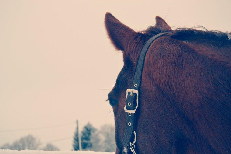 Aprener a écouter  ce que votre cheval vous murmure a votre' oreille.