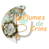 • Plumes De Crins •