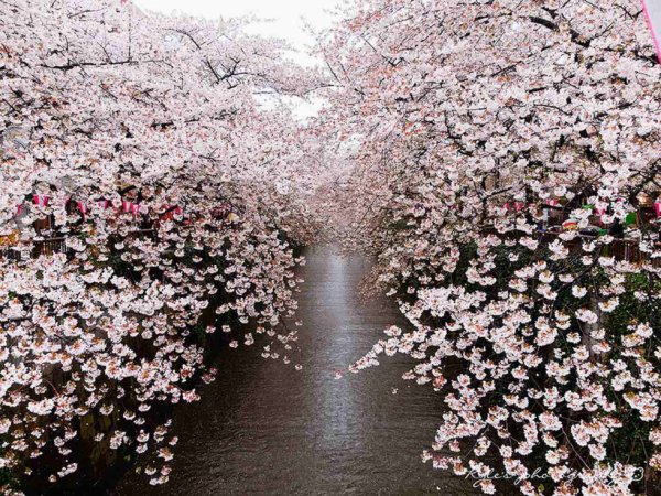 et c'est au Japan ... Tres belle ?
