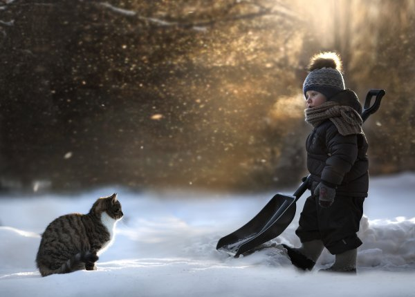 chat hivers,neige