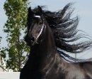 Photo de cheval1311